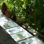 sbírka šišek nejroztodivnějších tvarů a velikostí